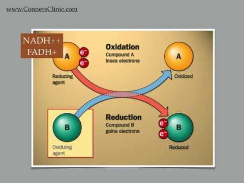 Genetics - Energy Production