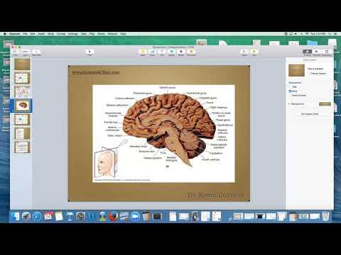 Dr. Kevin Conners - Sympathetic / Parasympathetic TONE
