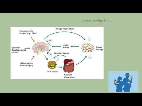 Dr. Kevin Conners - Leptin Balancer