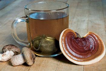 Medicinal Mushrooms tea