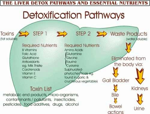 Understanding Detox Pathways