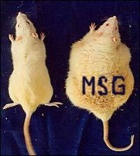 MSG - Killer in Disguise