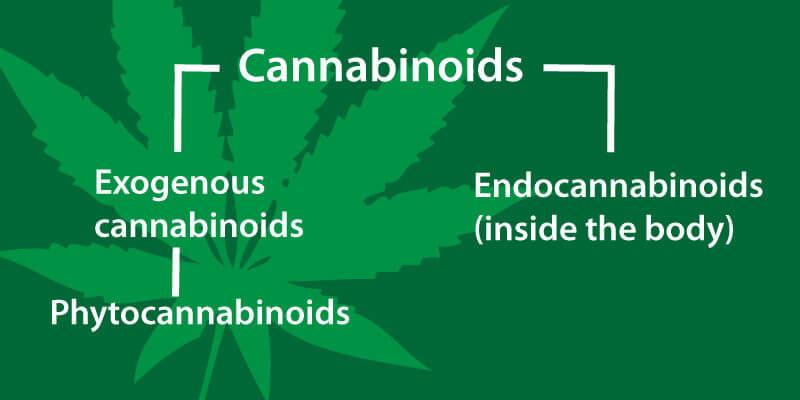 what-are-cannabinoids-Phytocannabinoids-and-Endocannabinoids-cbd-oil-conners-clinic